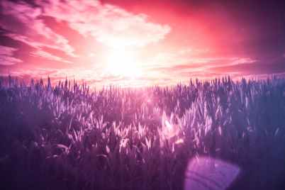 red-sun-purple-dream.jpg