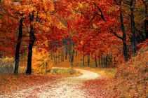 fall-autumn-red-season.jpg