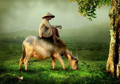 grandpa-old-shepherd-buffalo-46152.jpeg