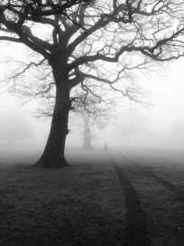 trees-mist-fog-eerie-51000.jpeg