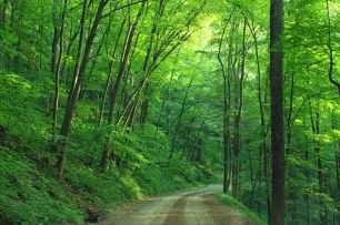 woods-landscape-road-loyalsock-state-forest-163703.jpeg