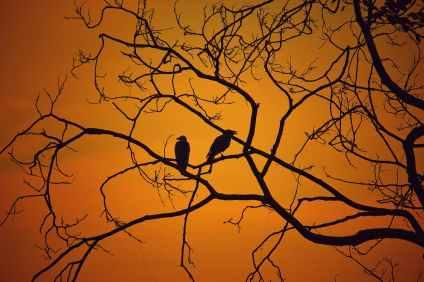 Photo by Tejas Prajapati on Pexels.com