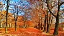 Photo by Ali Yasser Arwand on Pexels.com