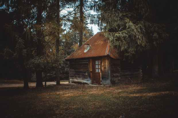 wooden house on a forest