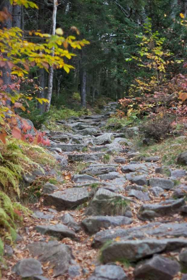 rocks trees hiking trail